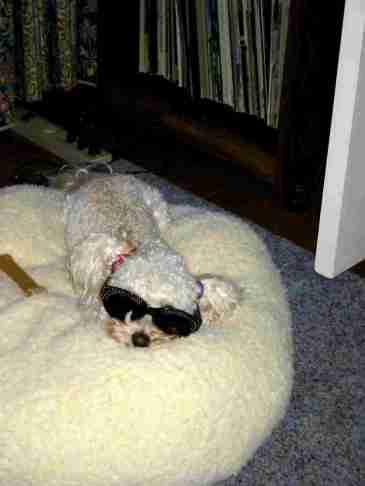 cooldog3