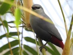 Bonus bird
